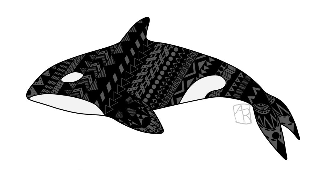 Patterned Killer Whale